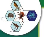 Center for Wildlife Health logo